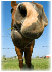 Hippotherapy1
